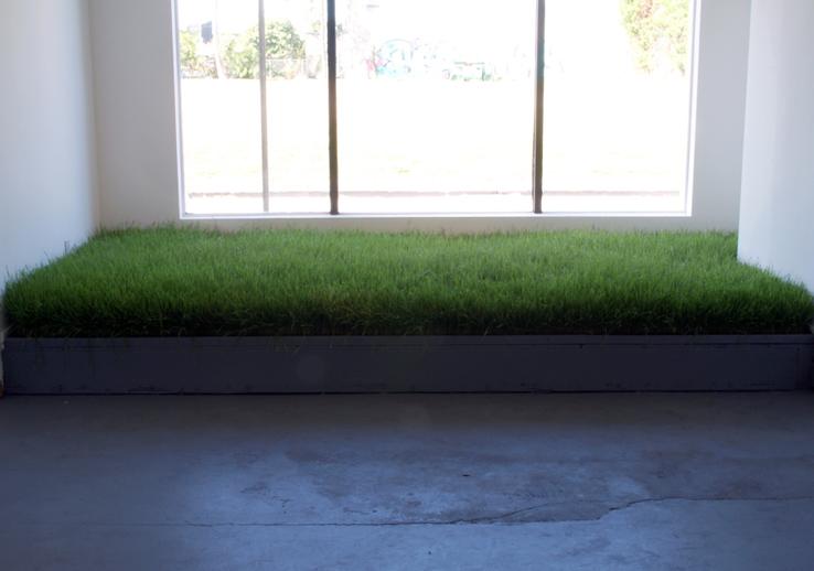 small-wheat-grass.jpg